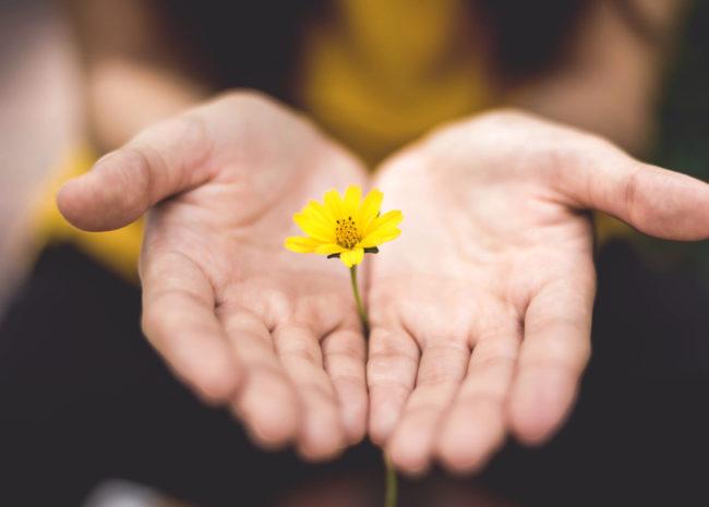 Duas mãos segurando uma flor.